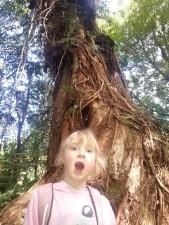 It's a VERY big tree!